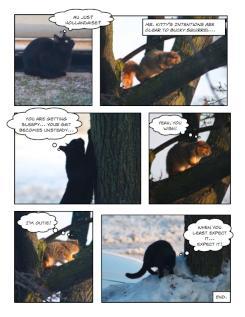 Kitty vs. Squirrel