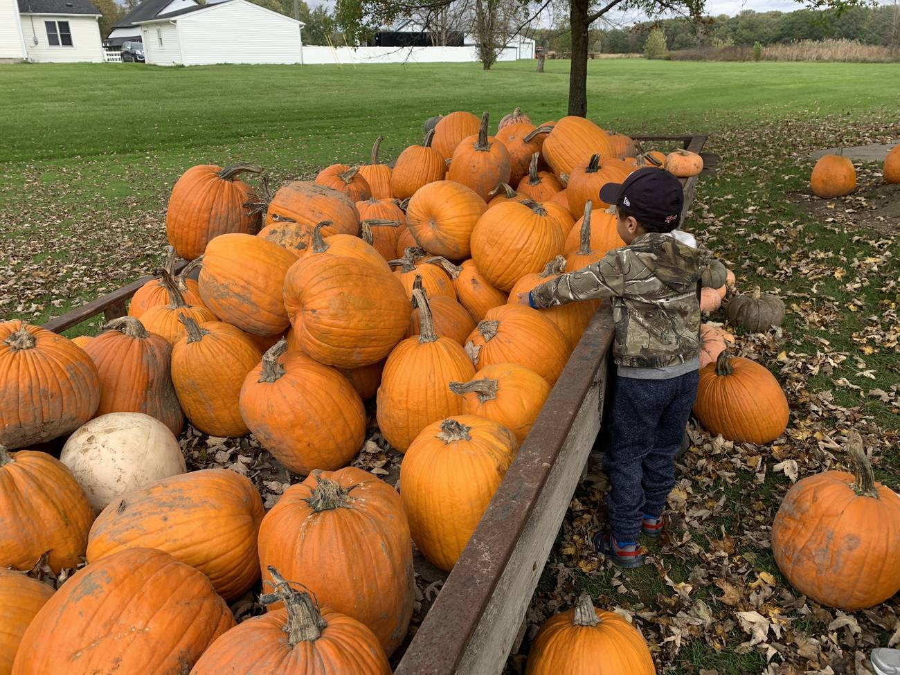 Jacob picks out a pumpkin