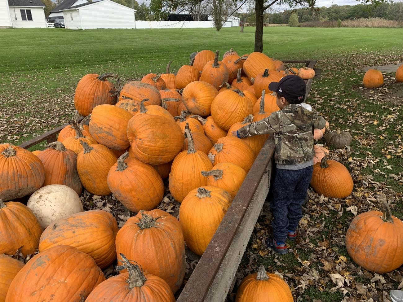 Jacob picks out a pumpkin